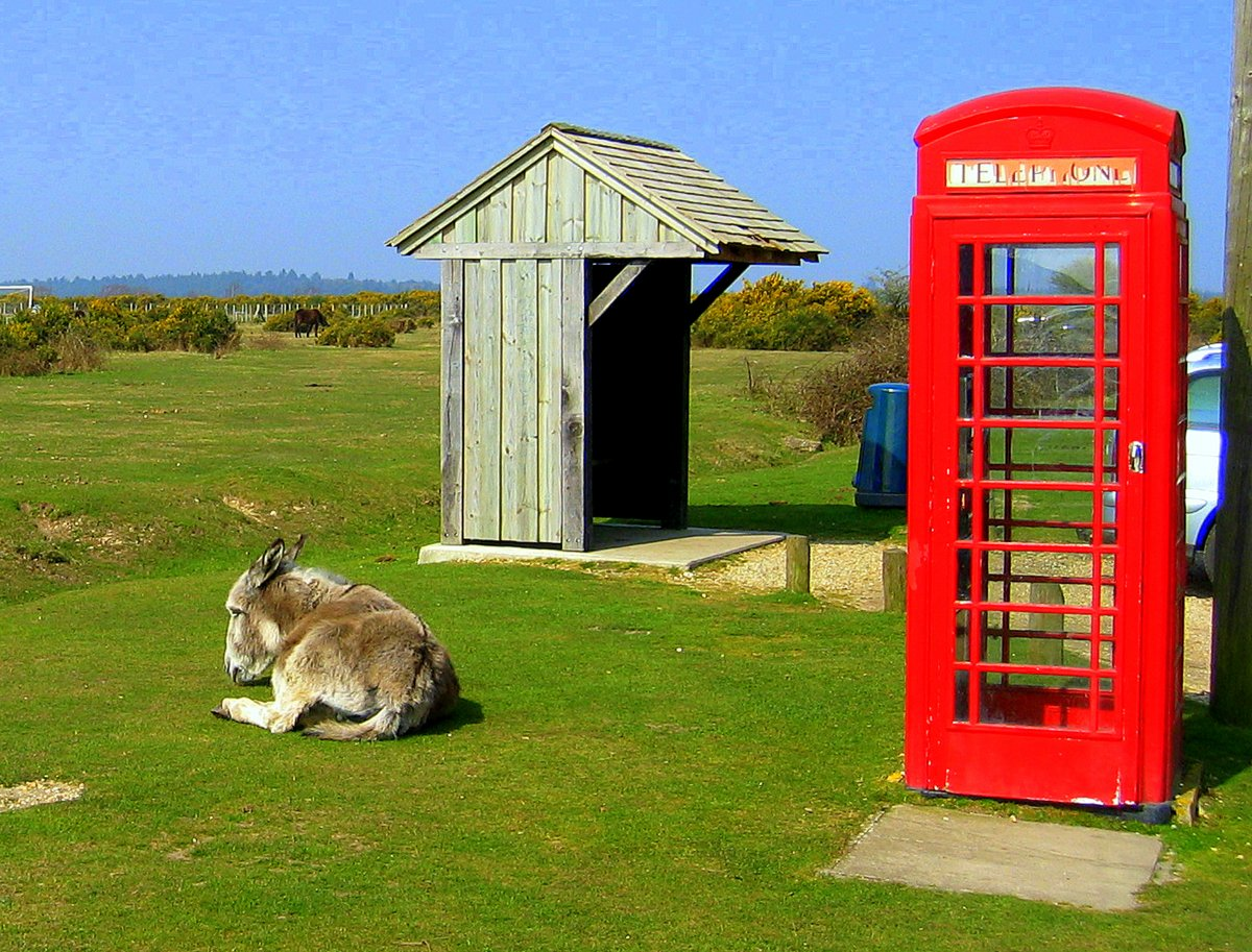 new forest - phone booth donkey